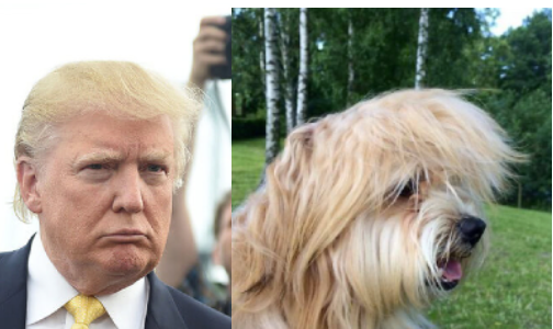 Dogs Who Resemble Politicians